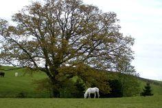 white horse Thornhill, Scotland