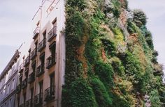 another garden wall. #garden