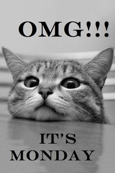 OMG!!! It's Monday....