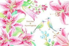 Watercolor Pink Lily &Humming Birds by Corner Croft on @creativemarket