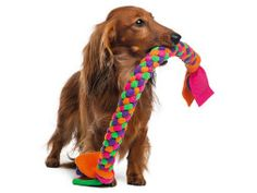 Petfinder came up with a list of DIY dog toys that you can make from things you already have in your home!