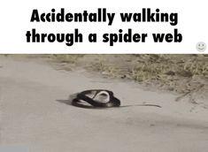 Walking through a spider web / iFunny :)