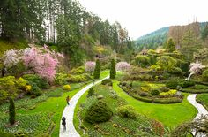 The Butchart Gardens - one of the most beautiful gardens in the world, according to Conde Nast Traveller. Seattle Vacation, Need A Vacation, Organic Gardening, Gardening Tips, Victoria Canada, Victoria British, Buchart Gardens, China Garden, Gardens Of The World