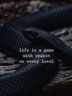 Snake Quotes life is a game with snakes on every level positive Snake Quotes. Here is Snake Quotes for you. Snake Quotes no matter how many times a snake sheds it skin its still a. Positive Vibes Quotes, Mood Quotes, Life Quotes, Envy Quotes, Status Quotes, Sassy Quotes, Snake Quotes, Great Quotes, Inspirational Quotes