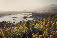 Pacific Coast, California