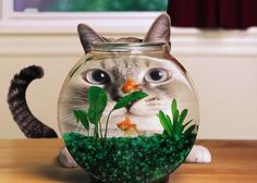 aaaa-Funny-cat-in-front-of-aquari.jpg