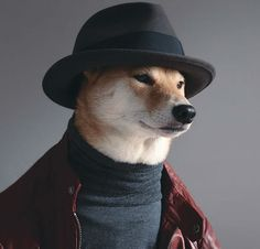 Now that we know of dogs who blog, we can be introduced to dogs who are personal stylists. Bodhi the Shiba Inu is the artist who helped his parents create the successful Tumblr Menswear Dog.