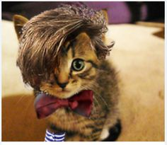 Some people think this is an EMO Cat! I only saw Matt Smith's Doctor....