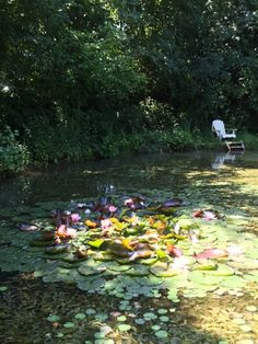 The sacred lilypond at Landhuis de Bevermeer, Angerlo, the Netherlands. Healing waters