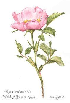 i fiori - disegni