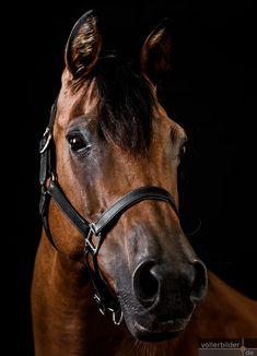 Fotoshootings mit schwarzem Hintergrund Baby Rhino, Equestrian, Horses, Animals, Photoshoot, Animales, Pictures, Animaux, Dieren