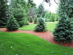 Landscaping with evergreens.