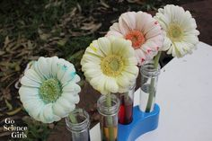 Colour Changing Flowers Experiment from Go Science Girls