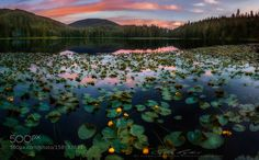 Lilies at sunset by akcharly
