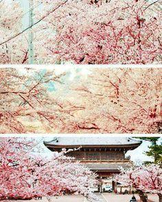 Sakurajapan