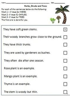 plant life for kids plant life worksheet classroom jr the life of education worksheets. Black Bedroom Furniture Sets. Home Design Ideas