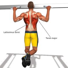 Lower Back Muscle Exercises Back Exercises l How to strengthen back muscles Back Muscle Exercises, Upper Back Exercises, Back Strengthening Exercises, Lat Workout, Bodyweight Workout Routine, Workout Fitness, Fitness Motivation, Workout Exercises, Good Back Workouts