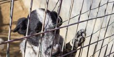 petition: Minnesota: Give Abused Cats and Dogs a Voice in Court!