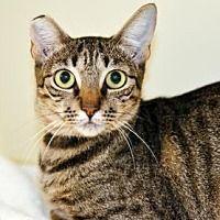 Pet Card Pets Cats Newberg Oregon