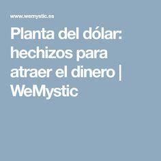Planta del dólar: hechizos para atraer el dinero | WeMystic