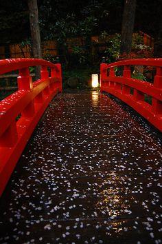 (akai hashi) red bridge and sakura blossoms