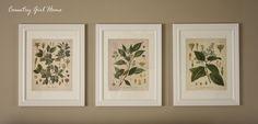 COUNTRY GIRL HOME: Free Botanical Printable Art