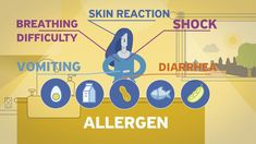 Do you want to know more about allergy? Do you find it difficult to explain food allergy to your patients? Watch new informative video on Allergy and share it with your and Food Allergies, Family Guy, Watch, Friends, Health, Amigos, Clock, Health Care, Healthy