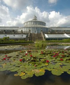 Copenhagen's Botanical Garden is a glorious place to seek respite in winter and bask in the sunshine in summer.