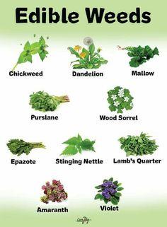 Calendula Benefits & Uses for Skin, Insect Bites, Anti-Cancer & More - Untinued Calendula Benefits, Matcha Benefits, Coconut Health Benefits, Weed Plants, Medicinal Plants, Natural Cures, Natural Healing, Wood Sorrel, Tomato Nutrition