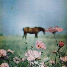 flowers and horse