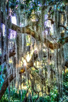 Moss tree, Orlando, Florida | Fernando Toledo on 500px