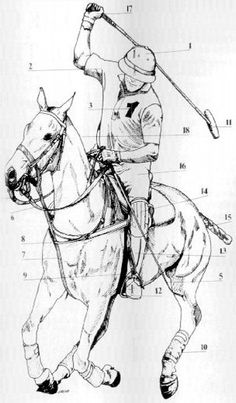 Polo Equipment