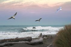 Ocean Shores, Washington.  My place to retire someday.