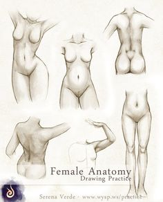 Female Anatomy Drawing Practice by NadezhdaVasile.deviantart.com on @deviantART