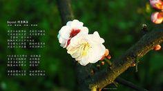 偶爾眷戀向下望 俗世滿佈冰冷 片片記憶似落葉 讓我似雪飄去 | Flickr - Photo Sharing!