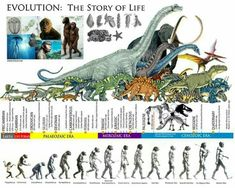 Pseudo Science, Science And Nature, Dinosaur Time, Human Evolution, Evolution Science, History Timeline, Extinct Animals, Prehistoric Creatures, World History
