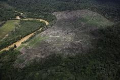 An aerial view of a plot of deforested Amazon rainforest near the city of Uruara, Para state April 22, 2013. REUTERS/Nacho Doce