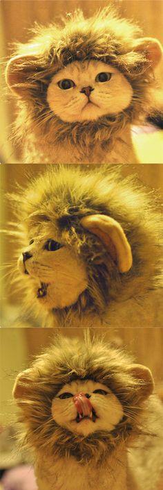Crinière lion pour chat http://www.lolpetshop.com/deguisements-chiens-et-chats/49-chapeau-deguisement-lion-pour-chat.html