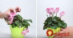 Nedarí vašim izbovým rastlinkám? Dajte im tento zázračný životabudič, po ktorom budú opäť krásne! Indoor Plants, Gardening Tips, Planter Pots, Herbs, Flowers, Utensils, Terrarium, Cactus, Garten