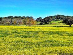 Charms of Spring in Alentejo.. by Vítor Laranjeiro on 500px