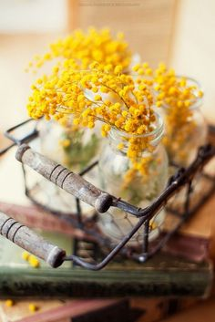 If there is a flower representing the ultimate winter , this is definitely the mimosa . In this difficult for other plants . Mimosas, Flower Power, Le Mimosa, Yellow Cottage, Shades Of Yellow, Decoration Table, Decorations, Mellow Yellow, Yellow Art