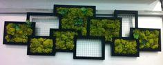 Détournement de cadre photo en cadre végétal! Zôdio