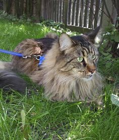 "* * KITTEH: "" Release meez from dis leash. Me musts warns yoo - de dawg beez armed."""
