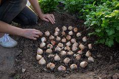 Outdoor Decor, Plants, Garden, Outdoor, Growing Plants, Growing, Indoor Plants