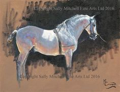 Andalusian Stallion Original Painting by Malcolm Coward