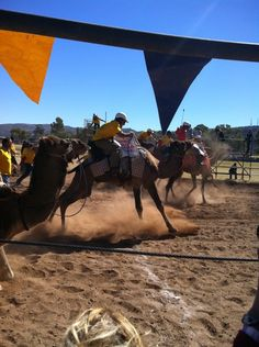 Camel Cup, Alice Springs, Northern Territory, Australia