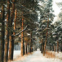 ***Winter path (Karelia, Russia) by Ellen Tyn (@liskin_dol) on Instagram cr.❄️c.