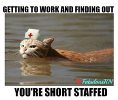Getting to work and finding out you're short staffed. Angry cat. Nurse humor. Nursing funny.