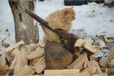...Cred că am destul de lucru pentru moment!, 17 poze cu pisici realizate la momentul potrivit - (Page 8)