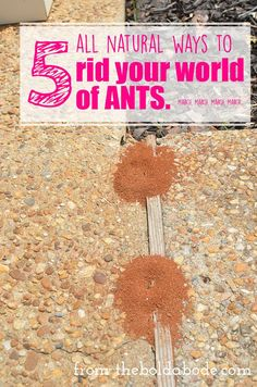 UGH. I hate ants! I'm going to try these 5 different all natural ways to get rid of them.